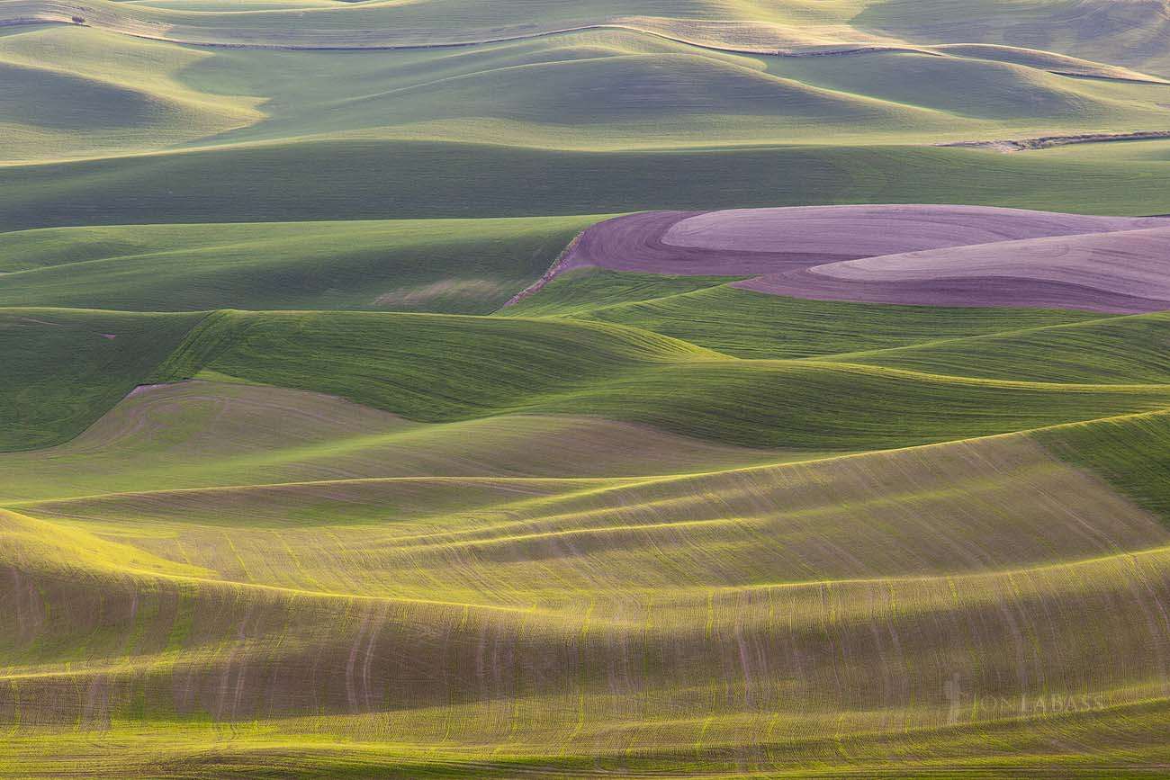 Agriculture, Farming, Green, Layers, Shadows, Sunset, The Palouse, United States, Washington, Wheat, Wheatfield