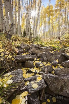 Afternoon, Aspen Trees, Aspens, Autumn, Colorado, Colorado Rockies, Colorado Rocky Mountains, Fall, Gunnison National Forest, Kebler Pass, Leaves, Rockies, Rocky Mountains, Sunburst, Sunstar, Trees, United States