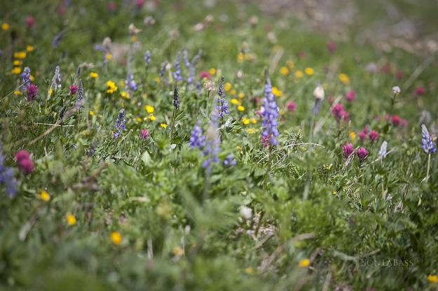 summer, washington, wildflowers, midday, floral, foliage, green, purple, pink, yellow