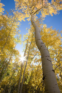 fall, autumn, colors, kebler pass, morning, aspens, sunburst, Colorado Rockies, Colorado Rocky Mountains, Rocky Mountains, Rockies