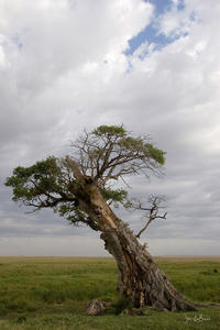 international, kenya, africa, tree