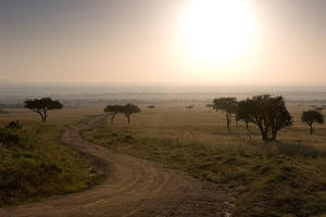 international, kenya, africa, morning, sunrise