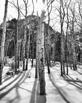 Aspen, Aspen Trees, Aspens, Black & White, Black and White, Colorado, Great Sand Dunes, Mountain Peaks, Mountains, National Parks, Sangre de Cristo Mountains, Sangre de Cristo Wilderness, Shadows, Snow, Sunburst, Sunstar, United States, White, Winter