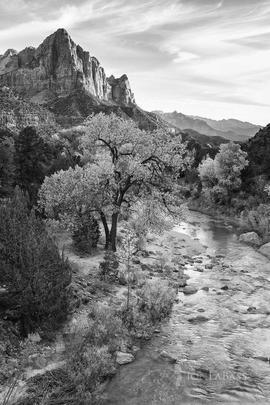Autumn, Black & White, Black and White, Mount Watchman, National Parks, River, Rockies, Rocky Mountains, Sunset, United States, Utah, Water, Zion