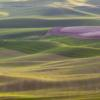 Agriculture;Farming;Green;Layers;Shadows;Sunset;The Palouse;United States;Washington;Wheat;Wheatfield